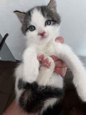 26.4.2019 - Dnes jsme přijali tři koťata nalezená v krabici u silnice mezi Lužicemi a Mikulčicemi. Více najdete zde. Jsou to dvě kočičky - Zuzanka a Rozinka a kocourek Jurášek.
