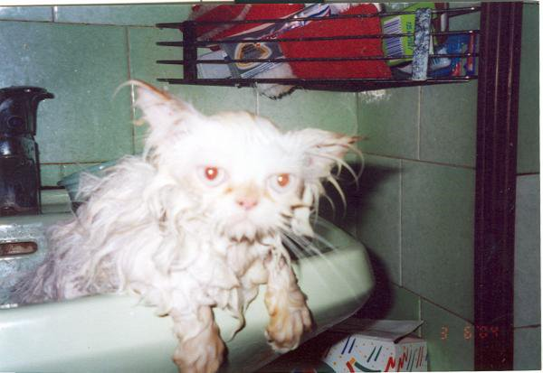 obrázek mokré kočičky