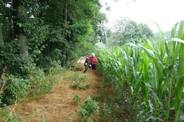 Já s Lenkou jsme to raději vzaly remízkem kolem kukuřičného pole.