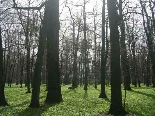 stromy a medvědí česnek v parku