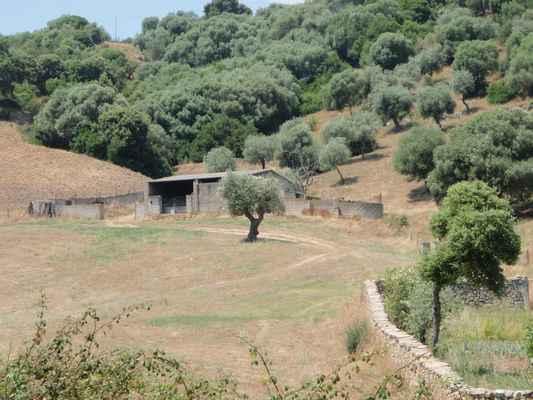 Olivová samota
